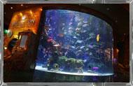 hotel silverton aquarium